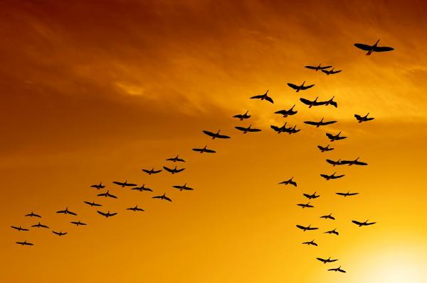 As aves que enobrecem o Céu com seus lindos vôos.