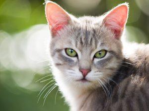 Olhar dos gatos