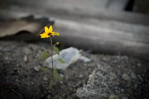 Imagem flor