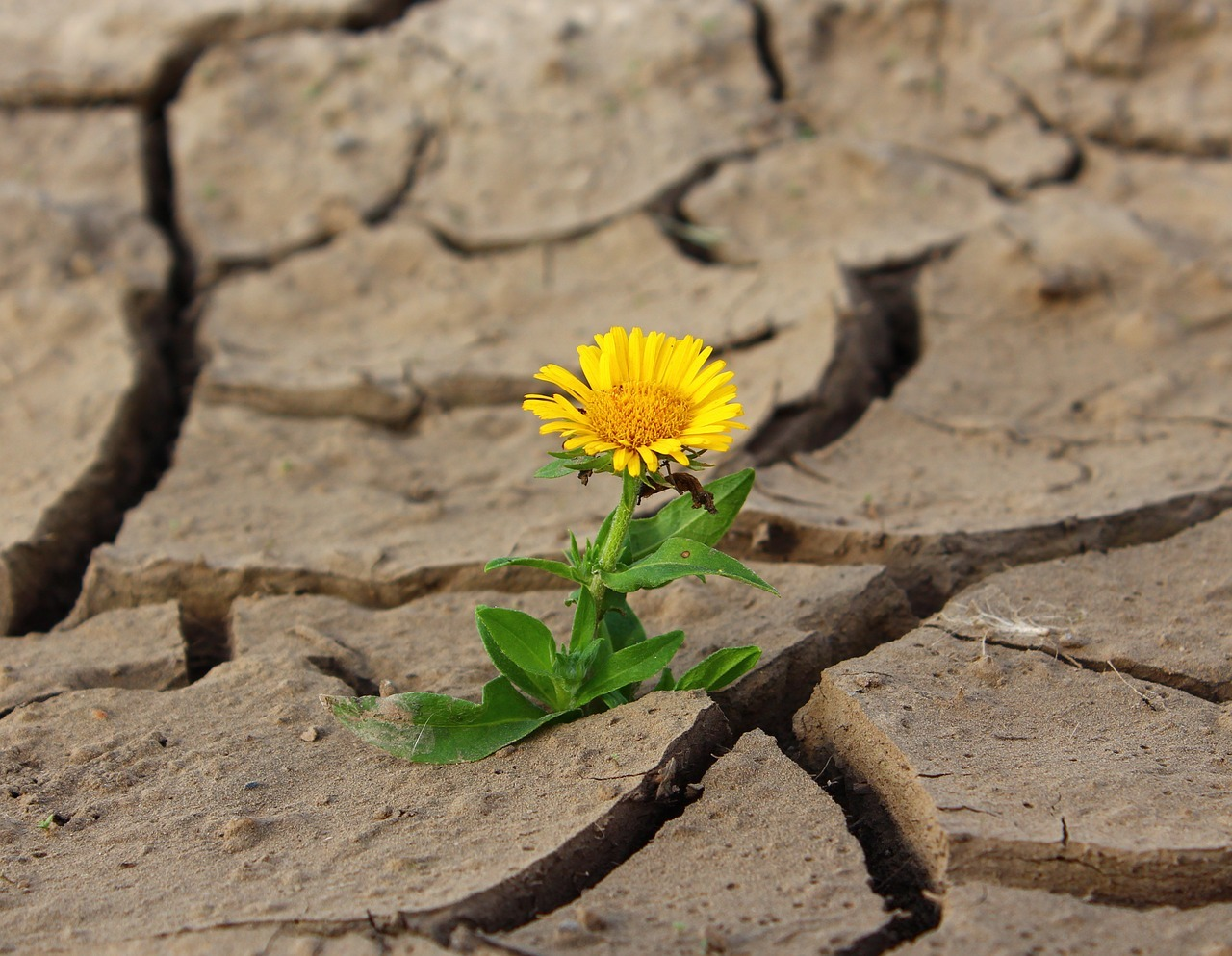 flor no deserto 2